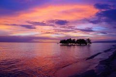 Arbre de palétuvier. Île de Siquijor, Philippines Photos stock