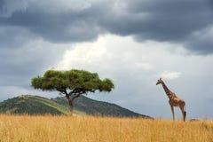 Paysage avec l'arbre en Afrique Photographie stock