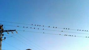 Paysage avec l'oiseau Photo libre de droits
