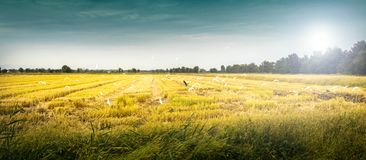 Paysage avec l'oiseau sauvage Image stock