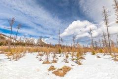 Paysage avec la forêt affectée par calamité de vent photographie stock libre de droits