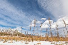 Paysage avec la forêt affectée par calamité de vent images stock