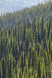 Paysage avec la forêt dans Bristish Colombie Bâti Revelstoke Ca photographie stock libre de droits