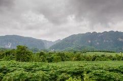 Paysage avec la montagne sur nuageux Images libres de droits