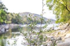 Paysage avec la rivière Photographie stock libre de droits