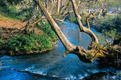 Paysage avec la rivière et les arbres Image libre de droits