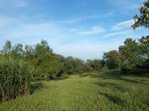 Paysage avec la rizière avec le ciel bleu Images stock
