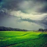 Paysage avec le champ et le Gray Dramatic Sky verts photo stock