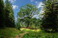 Paysage avec le chemin à l'arbre de la durée isolé Images libres de droits