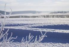 Paysage avec le ciel bleu propre et les branches d'arbre couvertes de gel photos libres de droits