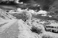 Paysage avec le ciel dramatique photographié dans l'infrarouge Photo stock