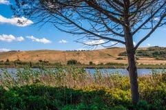 Paysage avec le lac de pin image libre de droits