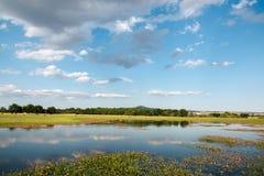 Paysage avec le lac et le pâturage Image libre de droits