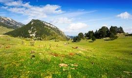 Paysage avec le pré des montagnes Photo libre de droits