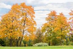 Paysage avec les arbres jaunes d'automne photographie stock