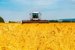 Paysage avec les champs de grain jaunes Images libres de droits