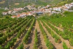 Paysage avec les cultures vert clair de vigne Image libre de droits
