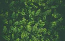 Paysage avec les feuilles vertes Photo stock