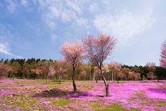 Paysage avec les fleurs roses sur la montagne Image stock