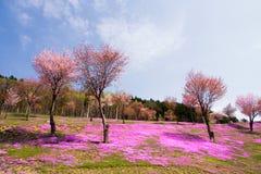 Paysage avec les fleurs roses sur la montagne Photo libre de droits