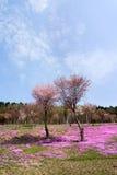 Paysage avec les fleurs roses sur la montagne Image libre de droits