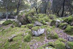 Paysage avec les roches moussues rondes de chaux images stock
