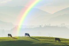 Paysage avec les vaches et l'arc-en-ciel Image libre de droits