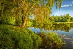 Paysage avec un arbre par la rivière photos stock