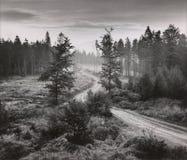 Paysage avec un chemin Photo libre de droits