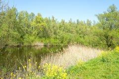 Paysage avec un lac au printemps avec des arbres de peuplier et des fleurs de colza photographie stock libre de droits