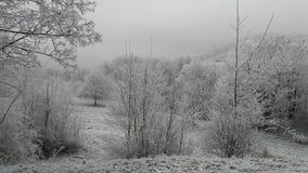 Paysage blanc d'hiver avec des arbres Image libre de droits