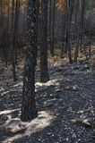 Paysage brûlé Photo stock