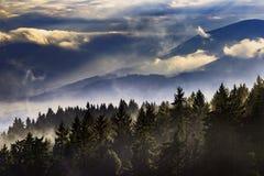 Paysage brumeux avec des arbres Images stock