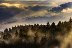 Paysage brumeux avec des arbres Photographie stock libre de droits