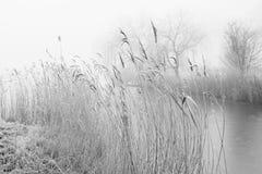 Paysage brumeux avec le roseau et les arbres Photo stock