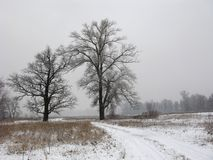 Paysage brumeux d'hiver Photos stock