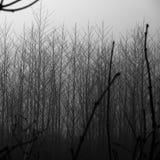 Paysage brumeux d'hiver foncé avec des arbres Image stock
