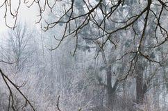 Paysage brumeux de forêt Photographie stock libre de droits