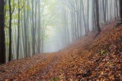 Paysage brumeux de forêt de matin mystique Images stock