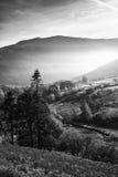 Paysage brumeux im de beau lever de soleil noir et blanc d'Autumn Fall Photo stock