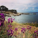 Paysage côtier de baie de Monterey Image stock