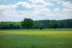 Paysage, champs et forêt ruraux Images libres de droits