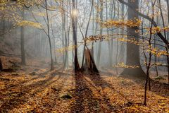 Paysage chaud d'automne dans une forêt, avec le soleil moulant de beaux rayons de lumière par la brume et les arbres photos stock