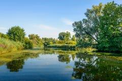 Paysage coloré avec des arbres et un étang naturel dans l'été photos libres de droits