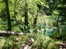 Paysage coloré et vibrant de rivage de lac Paysage tranquille utile comme fond Abaissez le canyon de lacs Lacs Plitvice nationaux Images libres de droits