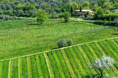 Paysage coloré stupéfiant de printemps dans le chianti, Toscane l'Italie photographie stock libre de droits