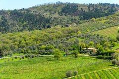 Paysage coloré stupéfiant de printemps dans le chianti, Toscane l'Italie photo libre de droits