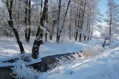 Paysage congelé calme d'hiver avec de beaux arbres givrés Photographie stock libre de droits