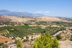 Paysage crétois avec les oliviers crète image stock
