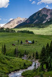 Paysage crêté et wildflowers de montagne du Colorado de butte Image libre de droits